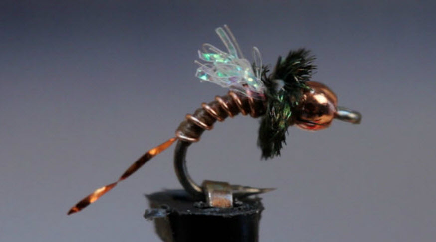 Copper Zebra Midge